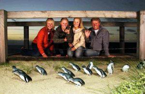 I pinguini sulla spiaggia di Phillip Island.