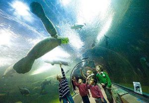 Parco Faunia a Madrid per il divertimento in viaggio con la famiglia.