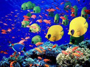 Immersioni nel Mar Rosso.