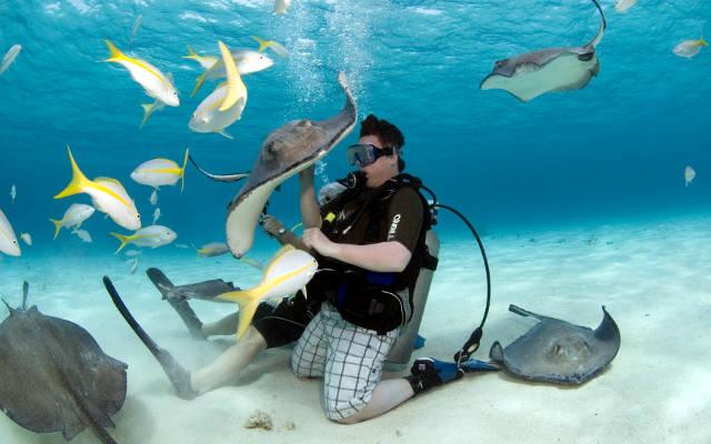 Snorkeling con le razze a Stingray City alle Cayman.