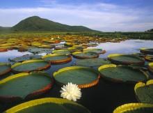 Meravigliosa immagine del Pantanal.
