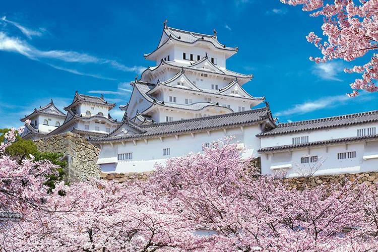 Il castello giapponese di Himeji circondato dai ciliegi fioriti.