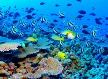 La Grande Barriera Corallina in Australia.