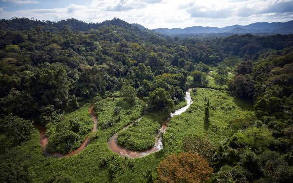 Un'immagine della riserva della biosfera Rio Platano.