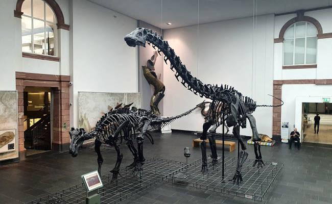 Alcuni scheletri di dinosauro esposti nel Museo di Storia Naturale Seckenberg.