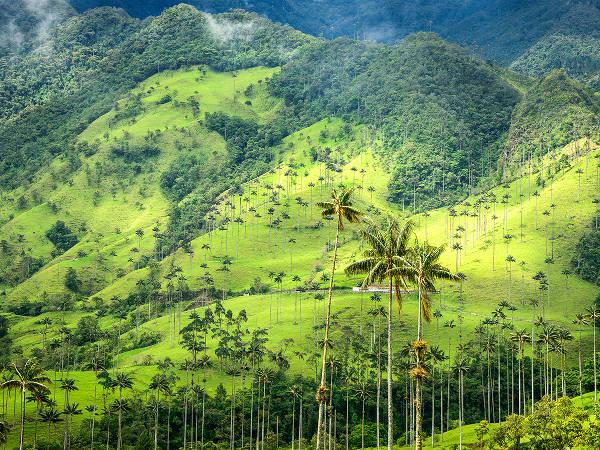 Piantagioni di caffè nella Valle di Cocora, Quindio, in colombia.