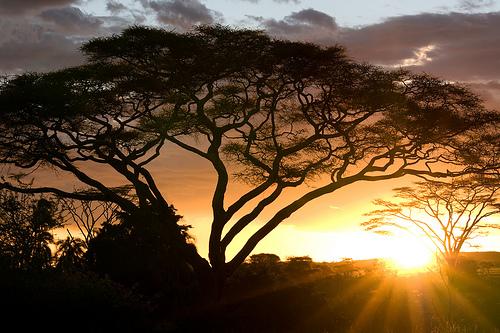 Il Parco Serengeti in Tanzania
