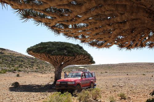 Isola di Socotra.