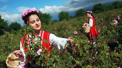 La Valle delle rose vicino Kazanlak.