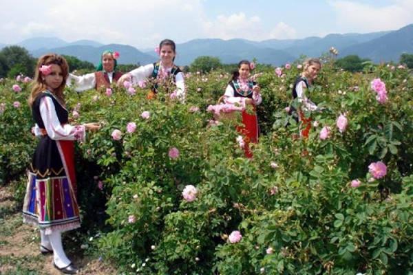La Valle delle rose in Bulgaria vicino Kazanlak.